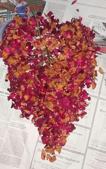 Rosenblüten für wohltuendes Fußbad